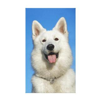 Perro de pastor suizo feliz impresion en lona