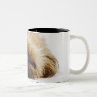 Perro de Pekingese, cierre para arriba Tazas De Café