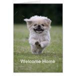 Perro de Pekingese que corre la tarjeta casera