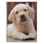 Perro de perrito amarillo de Labrador del bebé que Notebook