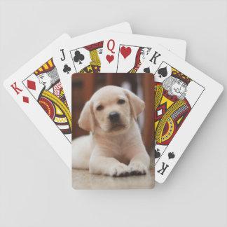Perro de perrito amarillo de Labrador del bebé que Naipes