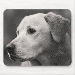 Perro de perrito amarillo del labrador retriever M Alfombrillas De Ratones