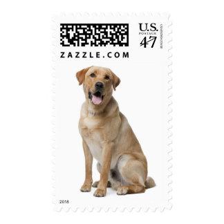 Perro de perrito amarillo del labrador retriever sellos