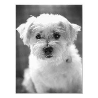 ¡Perro de perrito blanco - buena mañana! Foto