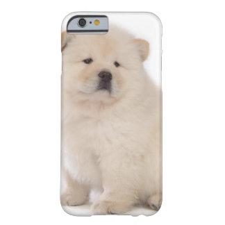 perro de perrito blanco lindo del perrito del