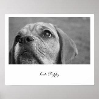 Perro de perrito blanco y negro hermoso de la póster