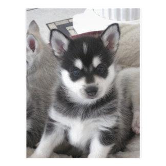 Perro de perrito de Alaska de Klee Kai Membrete A Diseño