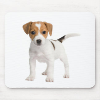 Perro de perrito de Jack Russell Terrier del amor  Alfombrilla De Ratones