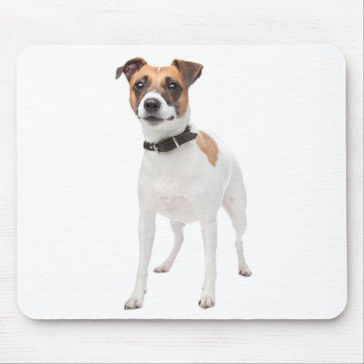 Perro de perrito de Jack Russell Terrier del amor  Alfombrillas De Raton