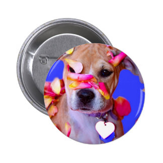 Perro de perrito de la mezcla del boxeador de Staf Pin