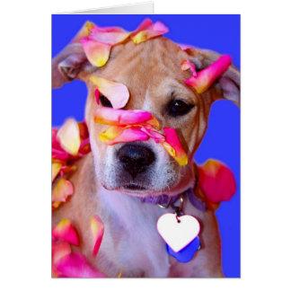 Perro de perrito de la mezcla del boxeador de Staf Felicitacion