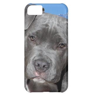 Perro de perrito de Pitbull Terrier del americano
