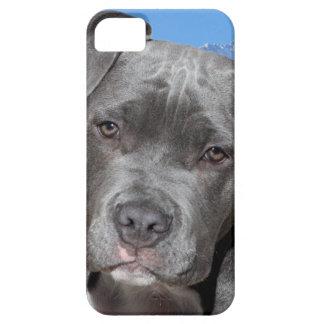 Perro de perrito de Pitbull Terrier del americano iPhone 5 Coberturas