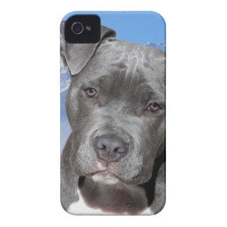 Perro de perrito de Pitbull Terrier del americano Case-Mate iPhone 4 Carcasas