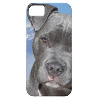 Perro de perrito de Pitbull Terrier del americano iPhone 5 Fundas
