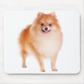 Perro de perrito de Pomeranian Pom Pom del amor Mo Tapetes De Ratón