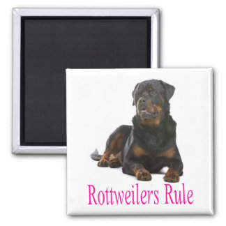 Perro de perrito de Rottweiler del amor Imán Cuadrado