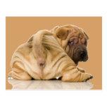 Perro de perrito de Shar-pei del chino Tarjetas Postales