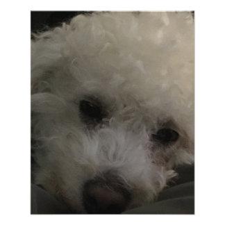 """""""Perro de perrito del caniche de Bichon Folleto 4.5"""" X 5.6"""""""