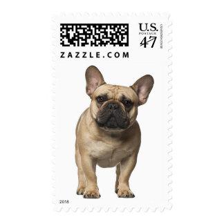 Perro de perrito del dogo francés - moreno y estampillas