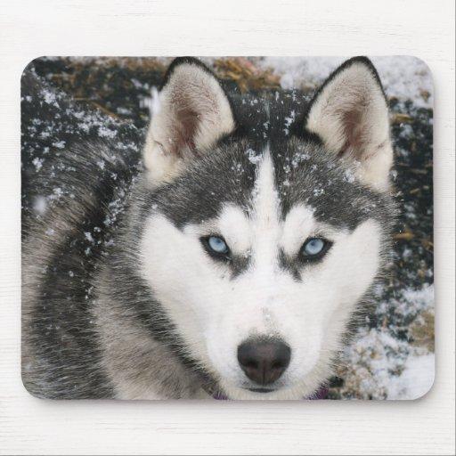 Perro de perrito del husky siberiano en la nieve M Alfombrilla De Raton