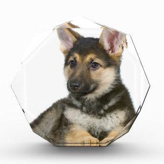 perro de perrito del perrito del pastor alemán