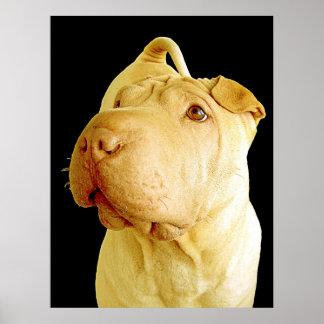 Perro de perrito diluído de Shar Pei del chino Póster