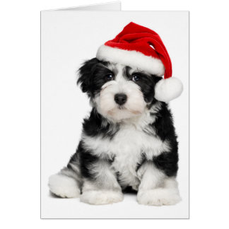 Perro de perrito lindo de Havanese del navidad 2 Tarjeta De Felicitación