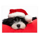 Perro de perrito lindo de Havanese del navidad Postal