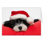 Perro de perrito lindo de Havanese del navidad Tarjeton