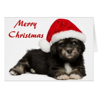 Perro de perrito lindo de Havanese del navidad Tarjeta De Felicitación