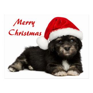 Perro de perrito lindo de Havanese del navidad Postales