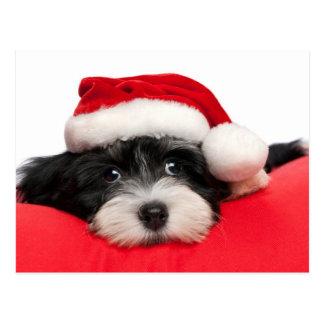 Perro de perrito lindo de Havanese del navidad Tarjetas Postales