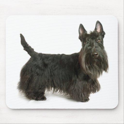 Perro de perrito lindo de Terrier del escocés Mous Alfombrilla De Ratones