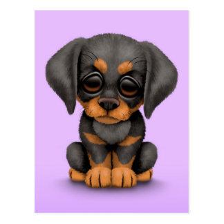 Perro de perrito lindo del Pinscher del Doberman e Postal