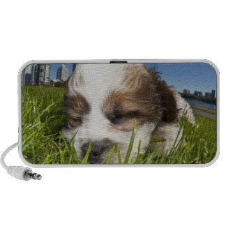 Perro de perrito lindo en el parque, Vancouver, A. iPod Altavoz