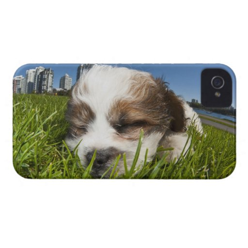Perro de perrito lindo en el parque, Vancouver, A. Case-Mate iPhone 4 Protectores