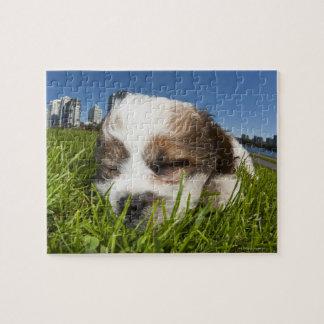 Perro de perrito lindo en el parque, Vancouver, Puzzle Con Fotos