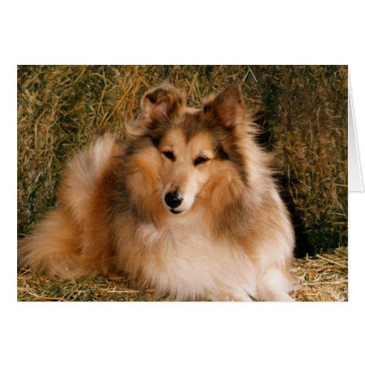 Perro de perrito lindo perfecto de la imagen felicitaciones