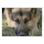 Perro de perrito lindo perfecto de la imagen felicitación