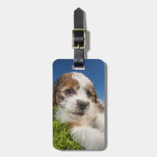 Perro de perrito lindo (Shitzu) Etiquetas De Equipaje