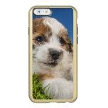 Perro de perrito lindo (Shitzu) Funda Para iPhone 6 Plus Incipio Feather Shine