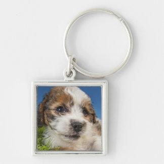 Perro de perrito lindo (Shitzu) Llavero Cuadrado Plateado