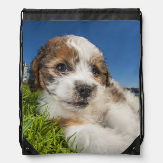 Perro de perrito lindo (Shitzu) Mochila