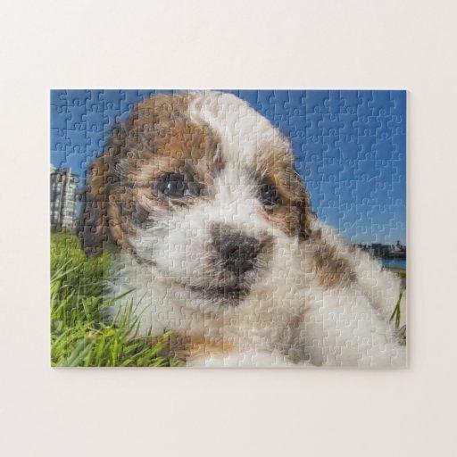 Perro de perrito lindo (Shitzu) Rompecabezas Con Fotos