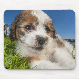 Perro de perrito lindo (Shitzu) Tapete De Raton