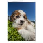 Perro de perrito lindo (Shitzu) Tarjeta De Felicitación
