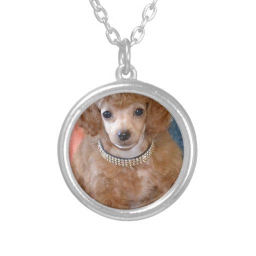 Perro de perrito mullido del caniche del albaricoq colgante redondo