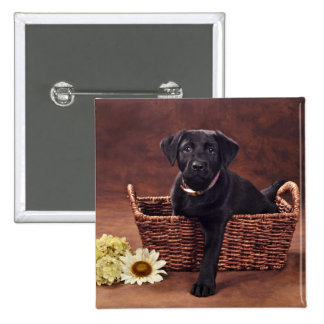 Perro de perrito negro de Labrador Pins