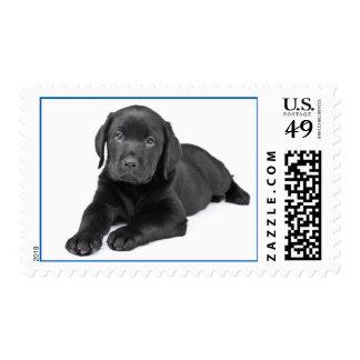 Perro de perrito negro del labrador retriever del sellos
